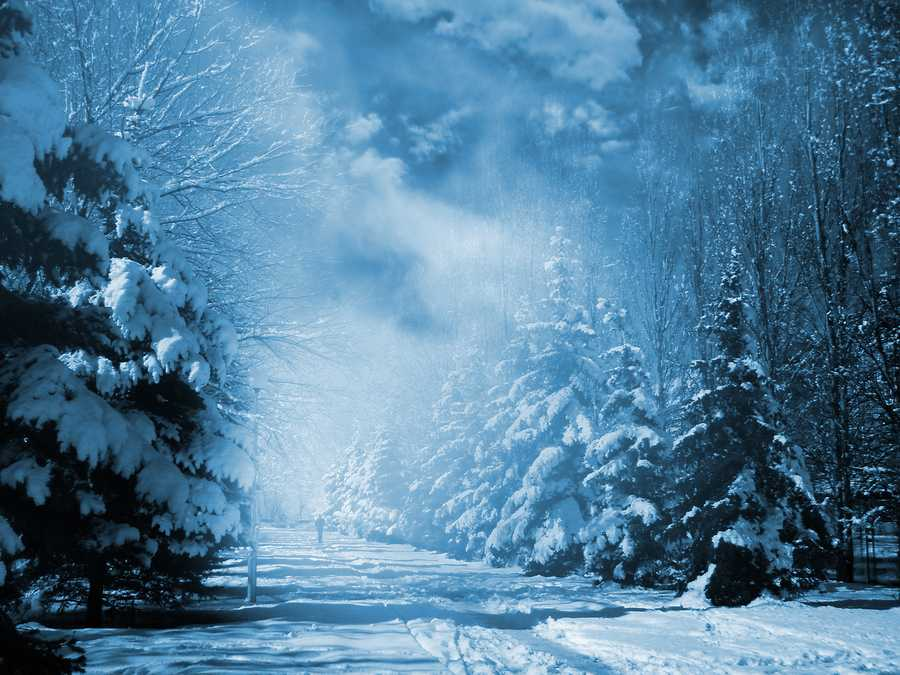 Evergreens+at+snowy+winter+park+in+the+night.+Special+toned+photo+f%2Fx.